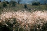 1987-Herbes.jpg